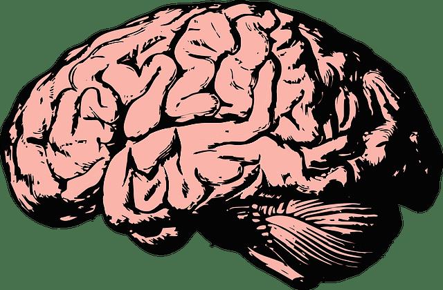 How Trauma Affects the Brain